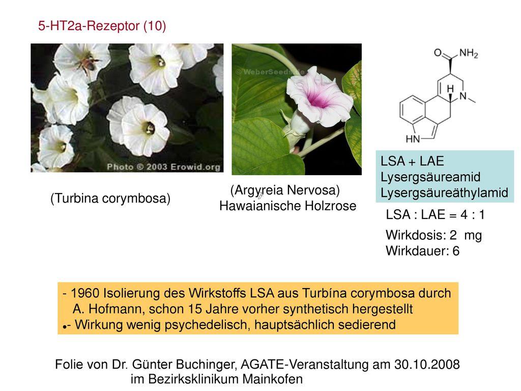 5-HT2a-Rezeptor (10) LSA + LAE. Lysergsäureamid. Lysergsäureäthylamid. (Argyreia Nervosa) Hawaianische Holzrose.