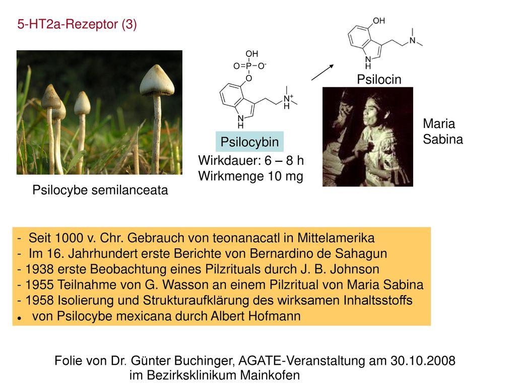 5-HT2a-Rezeptor (3) Psilocin. Maria. Sabina. Psilocybin. Wirkdauer: 6 – 8 h. Wirkmenge 10 mg. Psilocybe semilanceata.