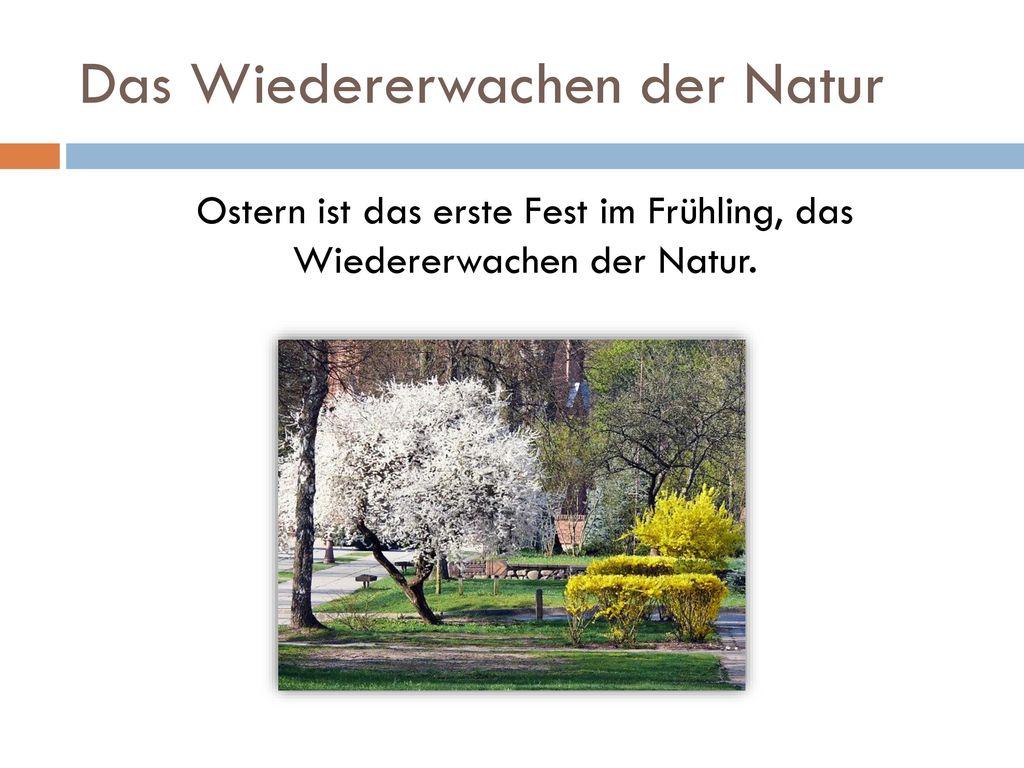 Das Wiedererwachen der Natur