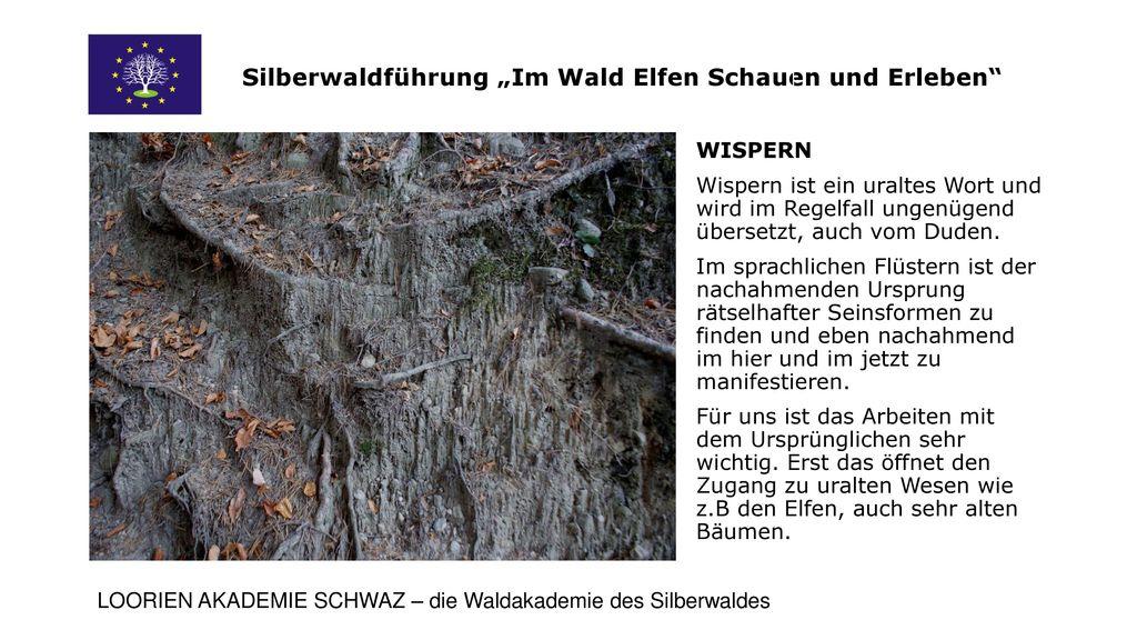 """Silberwaldführung """"Im Wald Elfen Schauen und Erleben"""