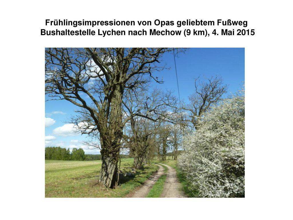 Frühlingsimpressionen von Opas geliebtem Fußweg Bushaltestelle Lychen nach Mechow (9 km), 4.