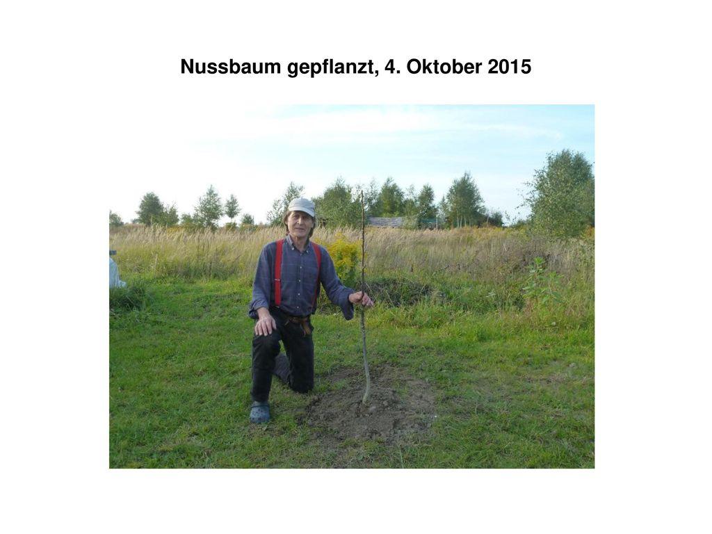 Nussbaum gepflanzt, 4. Oktober 2015