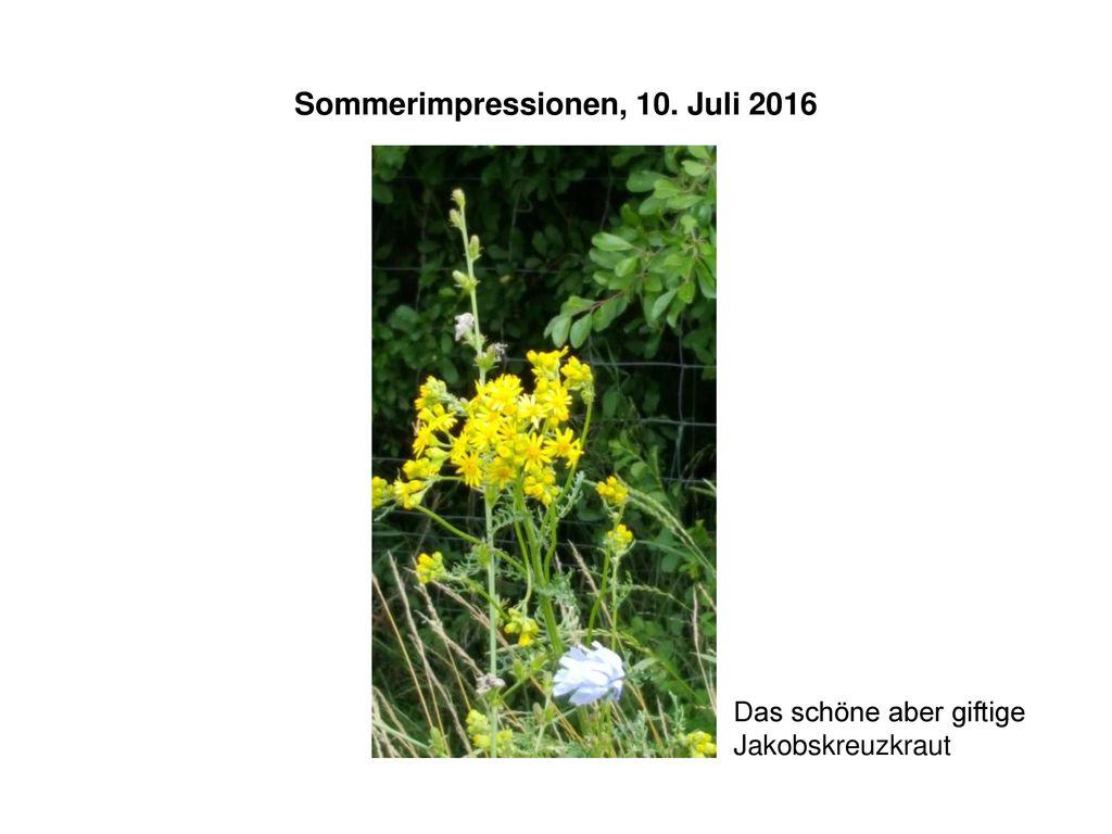 Sommerimpressionen, 10. Juli 2016