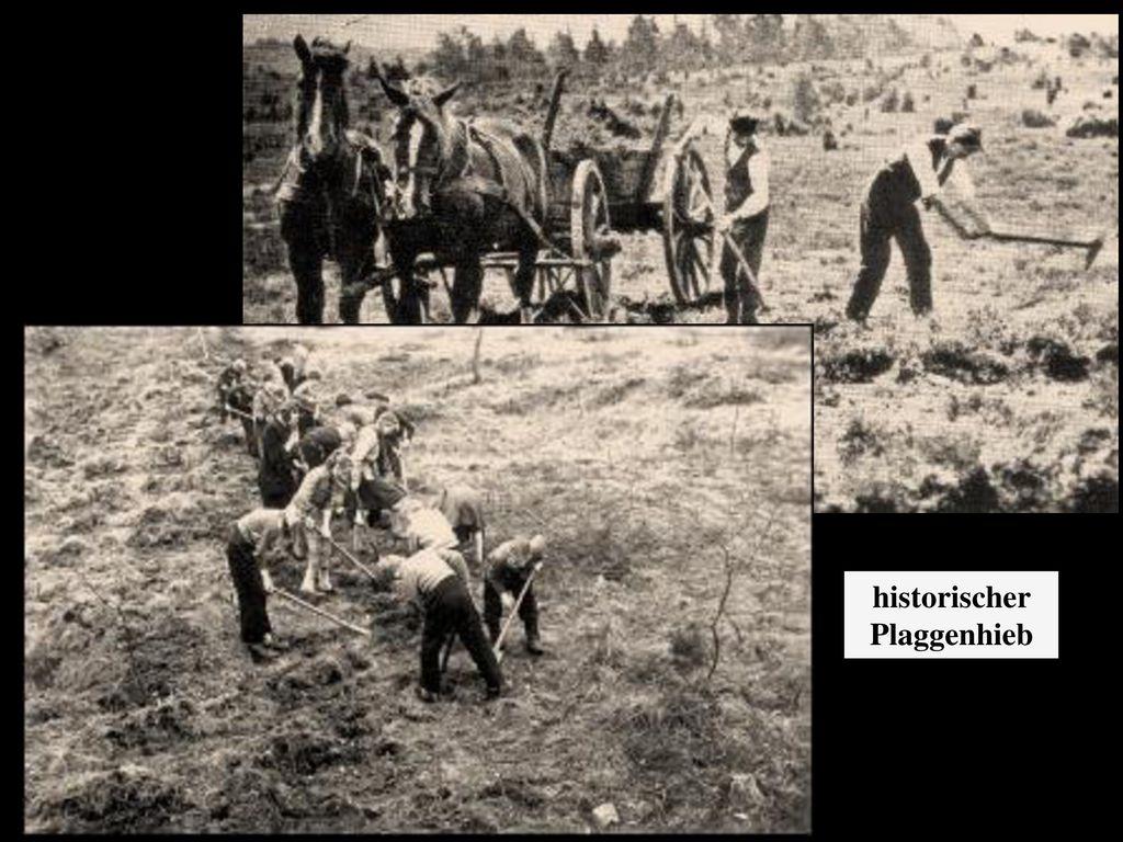 historischer Plaggenhieb
