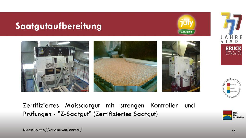 Saatgutaufbereitung Zertifiziertes Maissaatgut mit strengen Kontrollen und Prüfungen - Z-Saatgut (Zertifiziertes Saatgut)