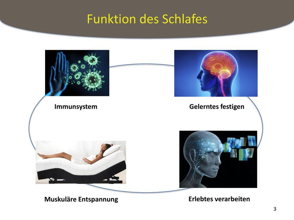 Schön Lumbosakralen Wirbelsäule Ideen - Anatomie Ideen - finotti.info
