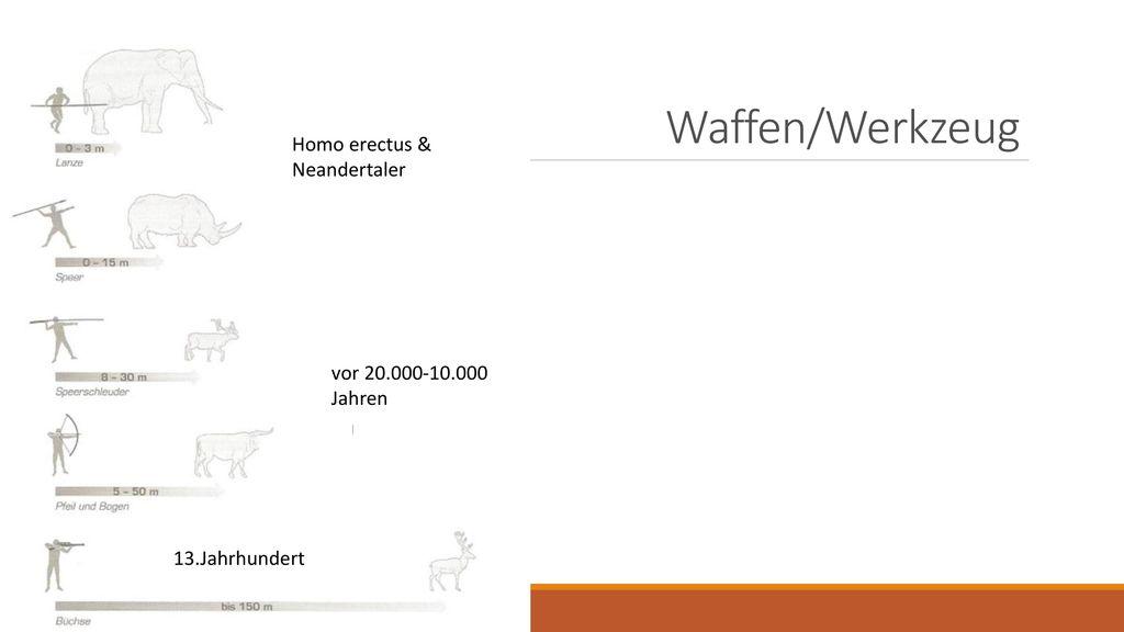Waffen/Werkzeug Homo erectus & Neandertaler vor 20.000-10.000 Jahren