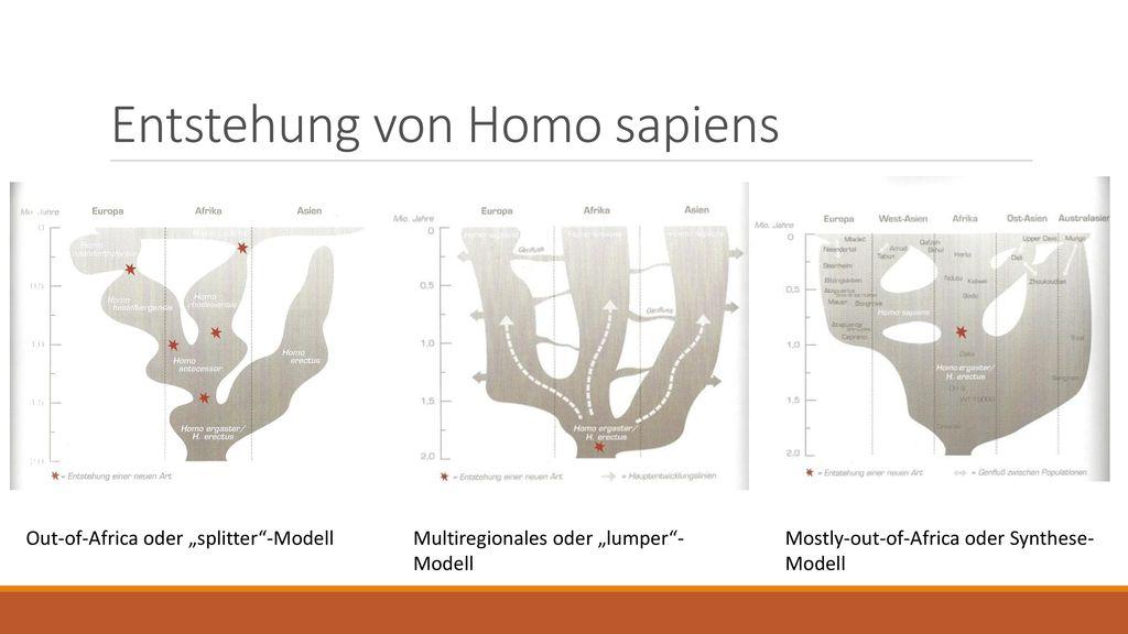 Entstehung von Homo sapiens