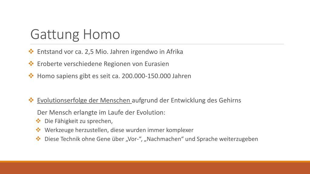 Gattung Homo Entstand vor ca. 2,5 Mio. Jahren irgendwo in Afrika