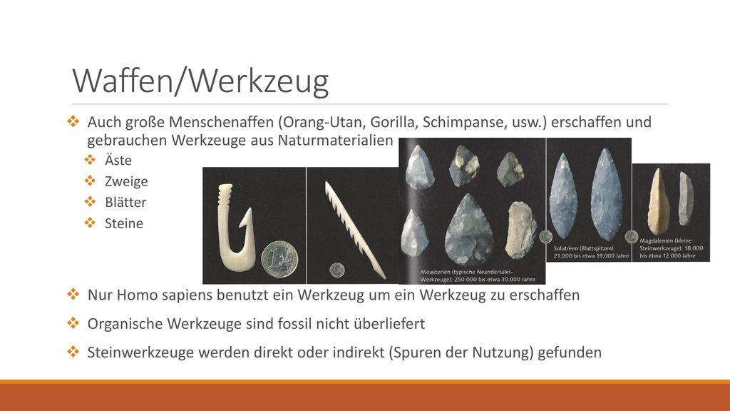 Waffen/Werkzeug Auch große Menschenaffen (Orang-Utan, Gorilla, Schimpanse, usw.) erschaffen und gebrauchen Werkzeuge aus Naturmaterialien.