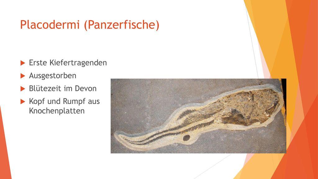 Placodermi (Panzerfische)