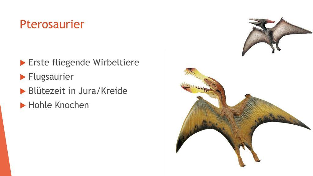Pterosaurier Erste fliegende Wirbeltiere Flugsaurier