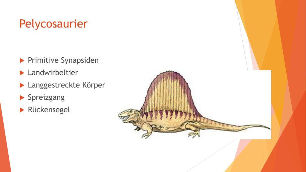 Pelycosaurier Primitive Synapsiden Landwirbeltier
