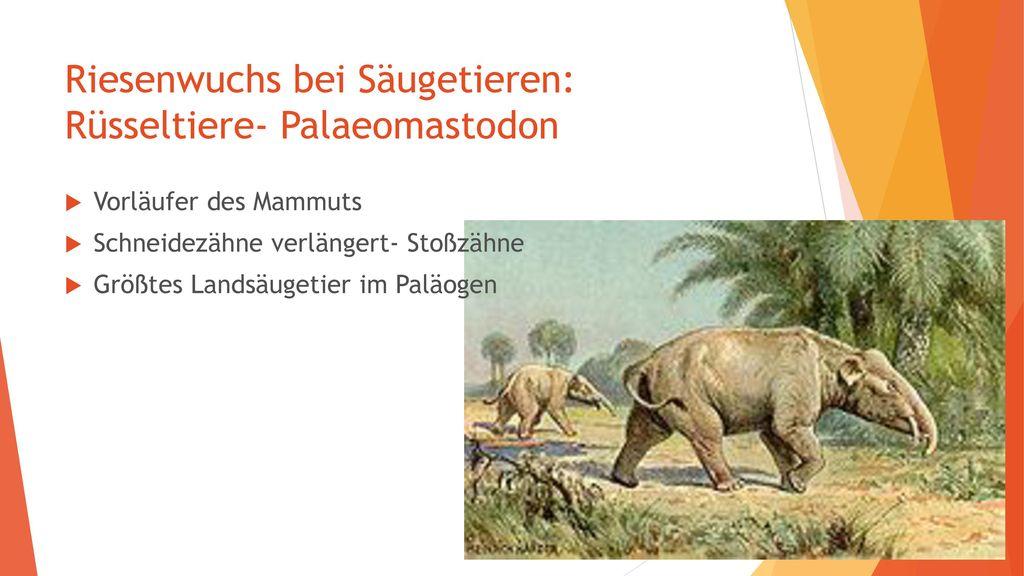 Riesenwuchs bei Säugetieren: Rüsseltiere- Palaeomastodon
