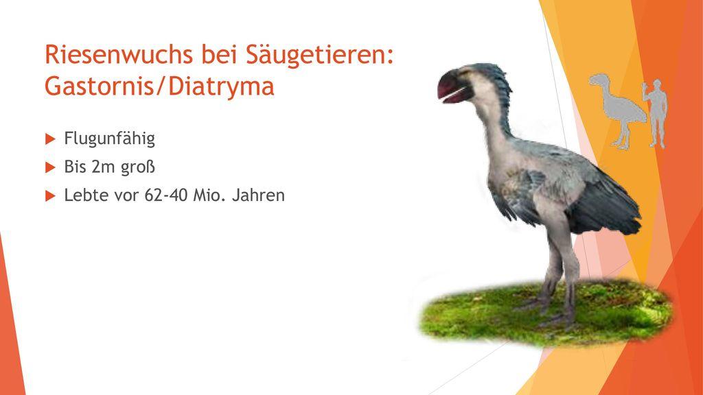 Riesenwuchs bei Säugetieren: Gastornis/Diatryma