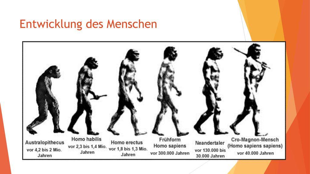 Entwicklung des Menschen