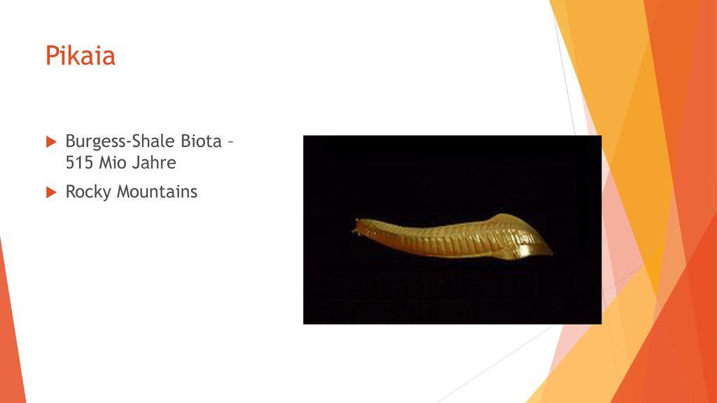 Pikaia Burgess-Shale Biota – 515 Mio Jahre Rocky Mountains