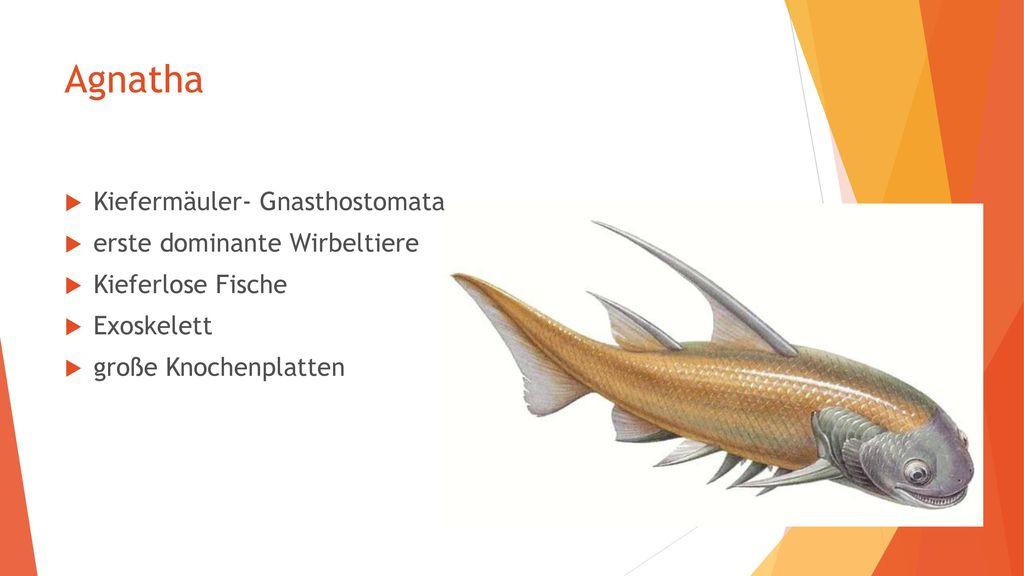 Agnatha Kiefermäuler- Gnasthostomata erste dominante Wirbeltiere