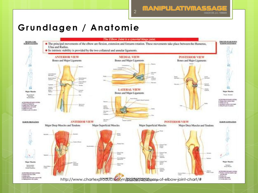 Grundlagen / Anatomie http://www.chartexproducts.com/poster/anatomy-of-elbow-joint-chart/#