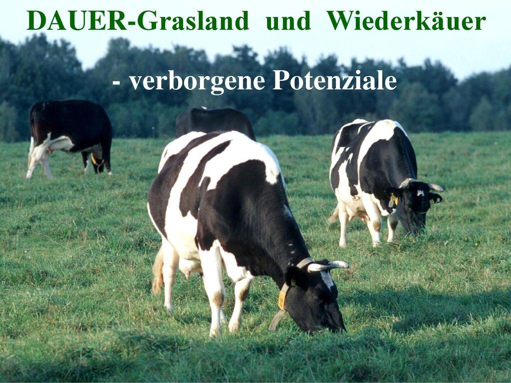 DAUER-Grasland und Wiederkäuer