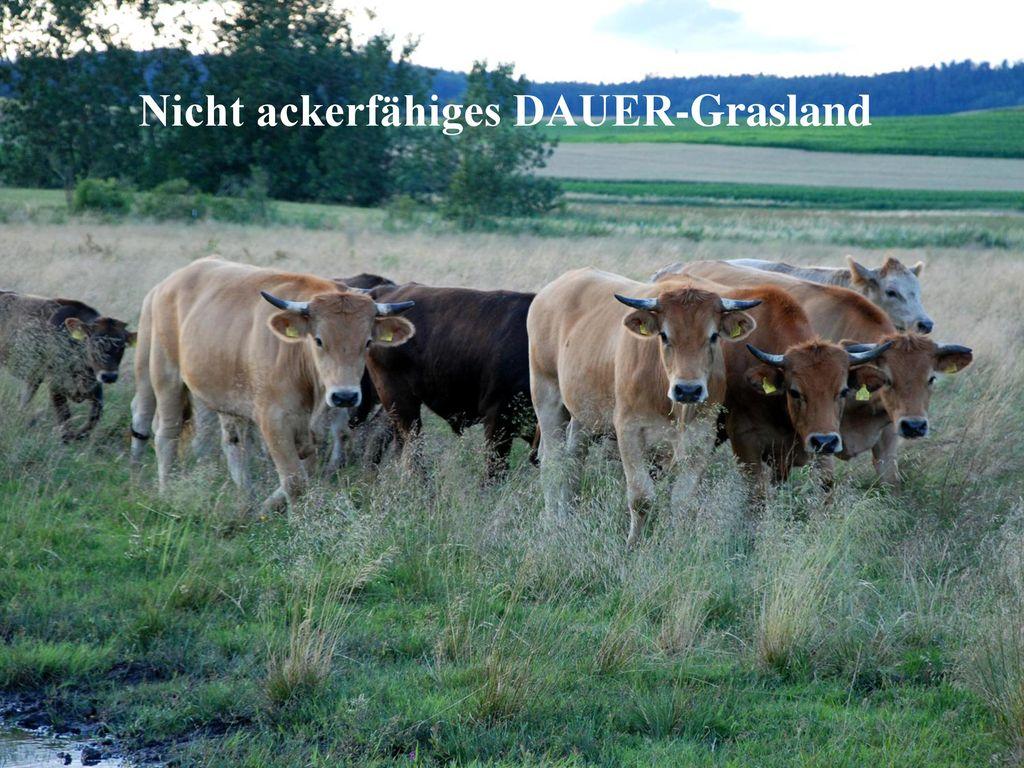 Nicht ackerfähiges DAUER-Grasland