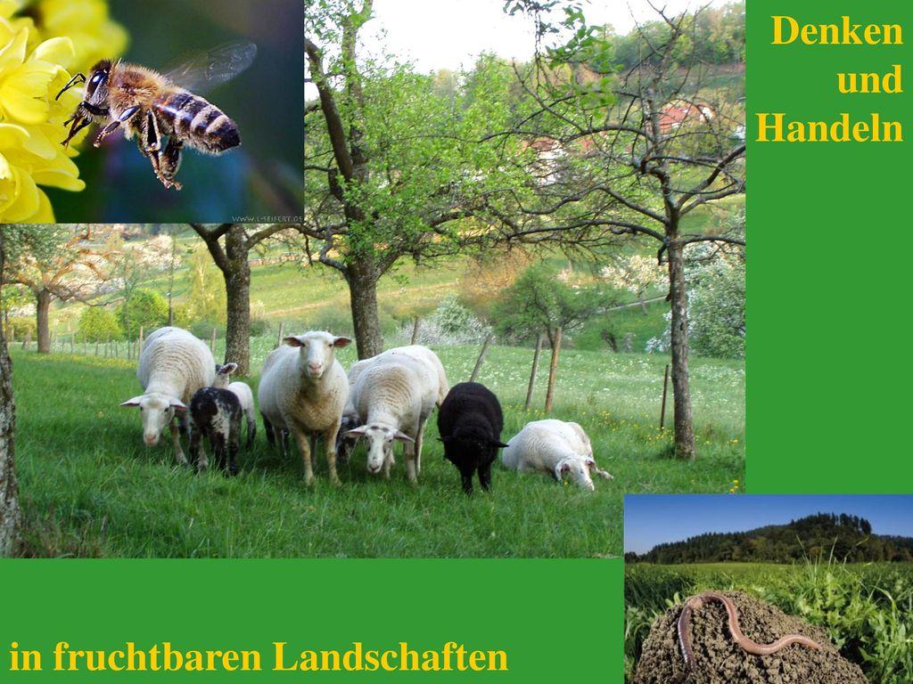 Denken und Handeln in fruchtbaren Landschaften
