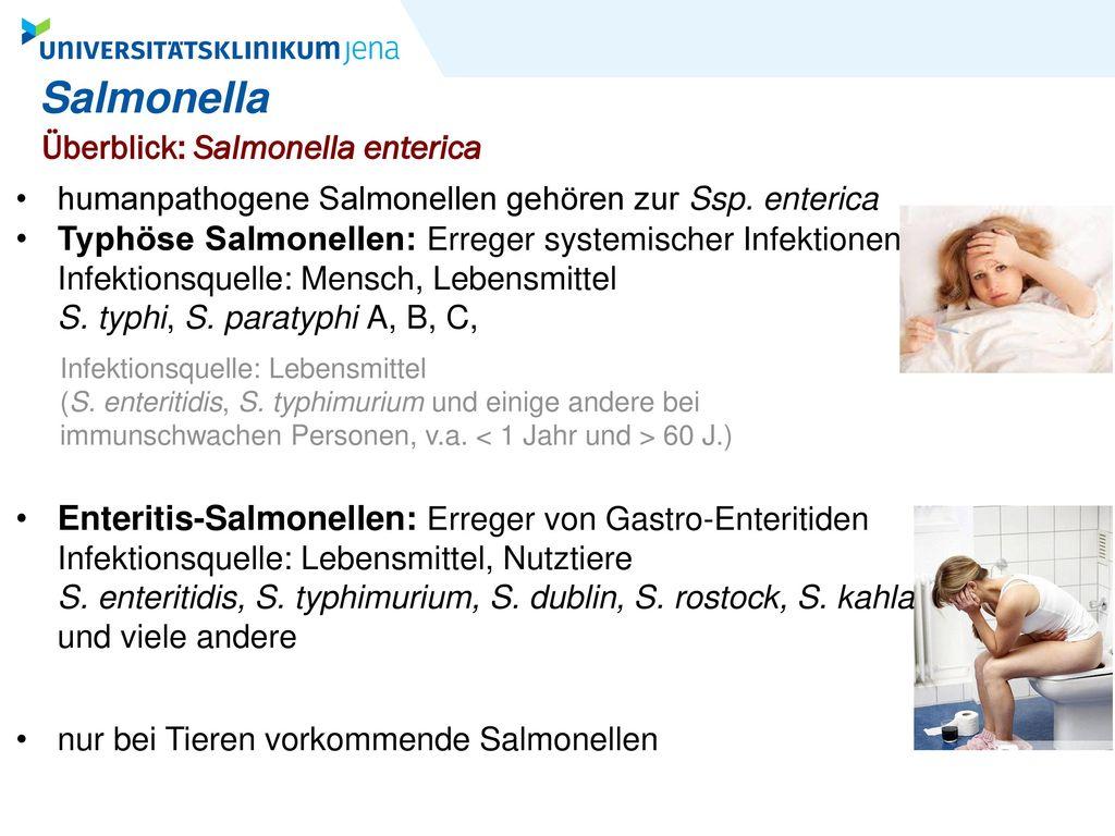 Salmonella Überblick: Salmonella enterica