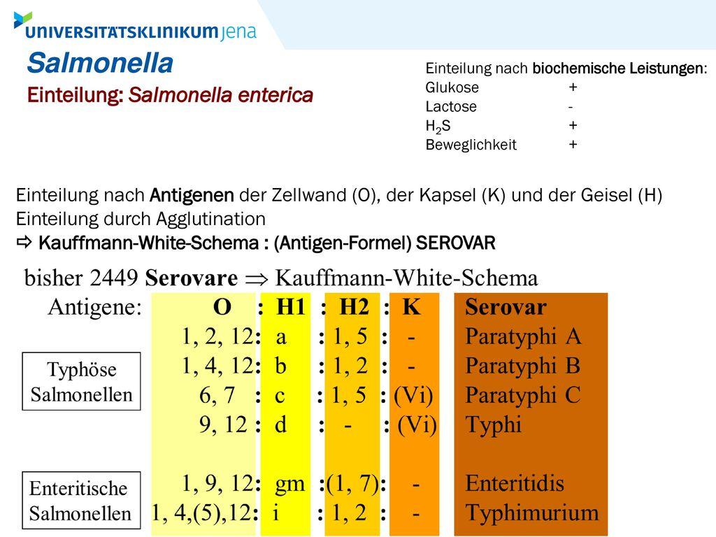 Salmonella Einteilung: Salmonella enterica
