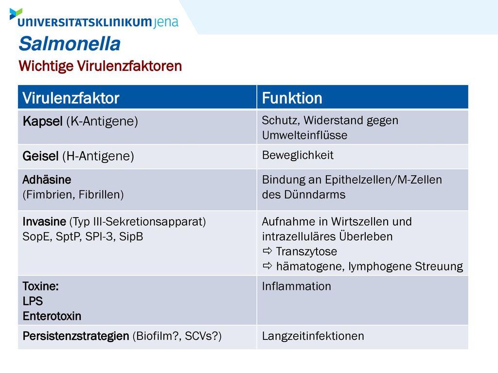 Salmonella Virulenzfaktor Funktion Wichtige Virulenzfaktoren