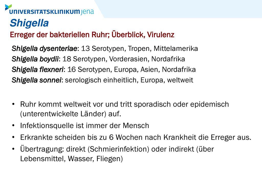 Shigella Erreger der bakteriellen Ruhr; Überblick, Virulenz
