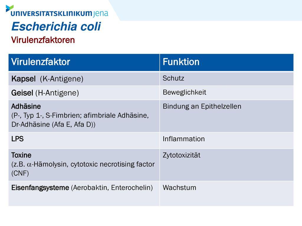 Escherichia coli Virulenzfaktor Funktion Virulenzfaktoren