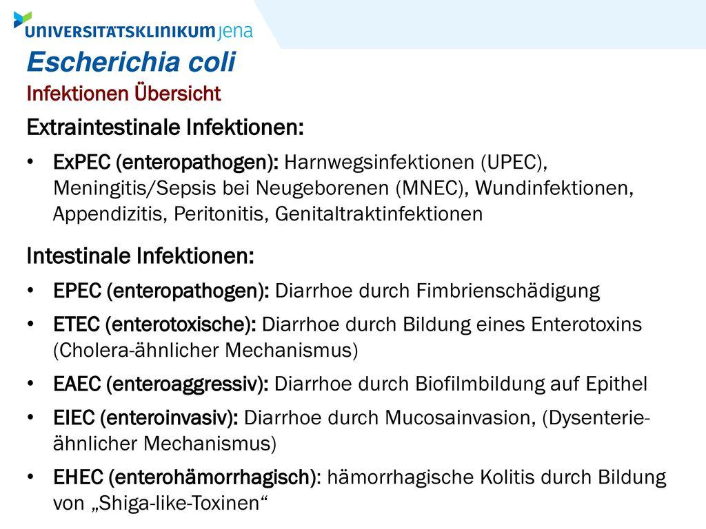 Escherichia coli Extraintestinale Infektionen: