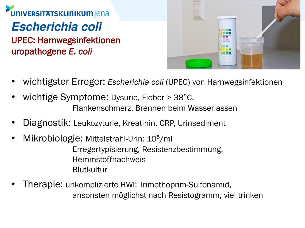 Escherichia coli UPEC: Harnwegsinfektionen. uropathogene E. coli. wichtigster Erreger: Escherichia coli (UPEC) von Harnwegsinfektionen.