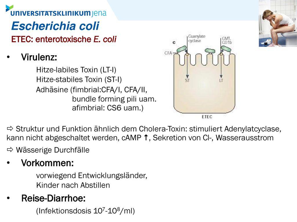 Escherichia coli ETEC: enterotoxische E. coli.
