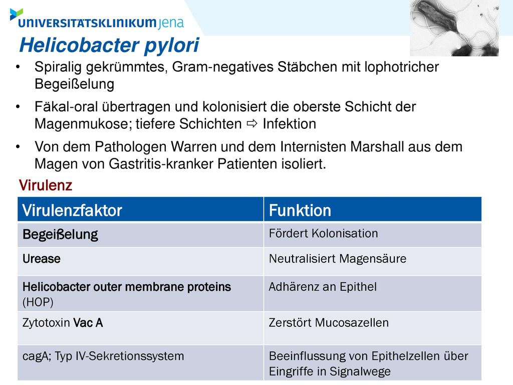 Helicobacter pylori Virulenzfaktor Funktion Virulenz
