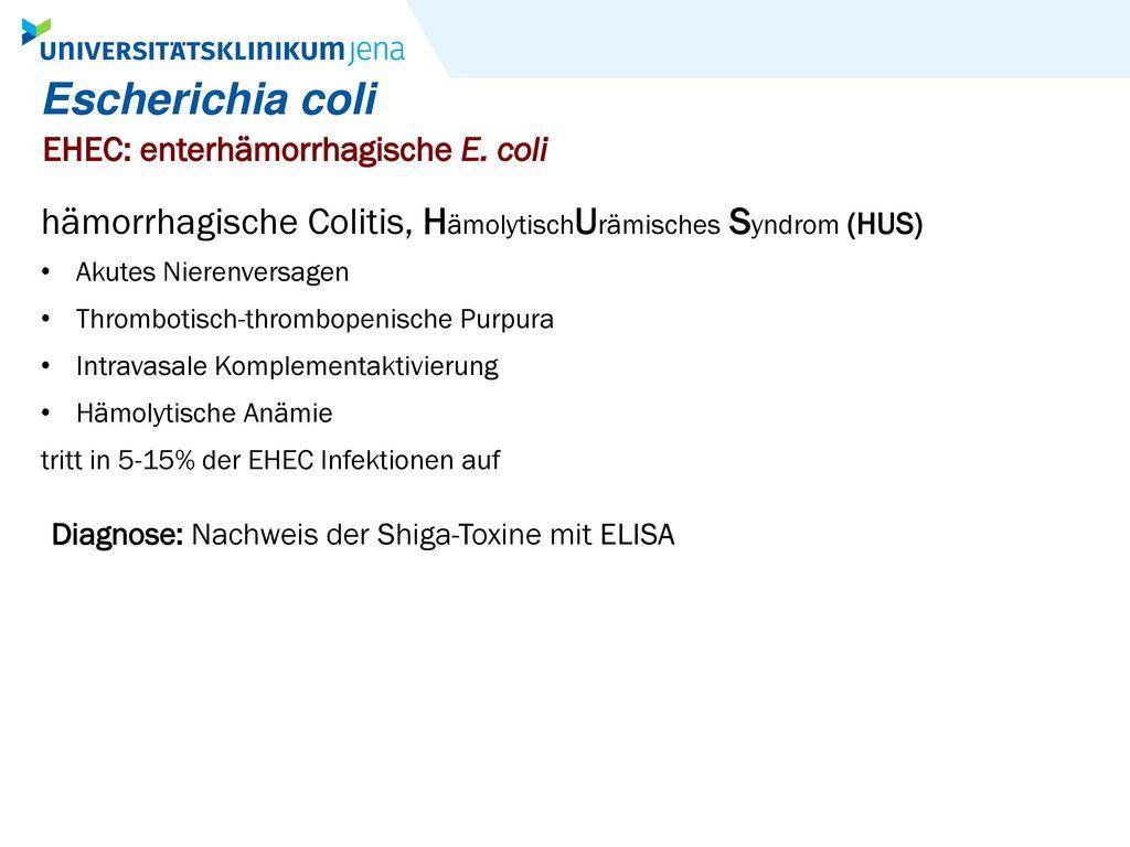 Escherichia coli EHEC: enterhämorrhagische E. coli. hämorrhagische Colitis, HämolytischUrämisches Syndrom (HUS)
