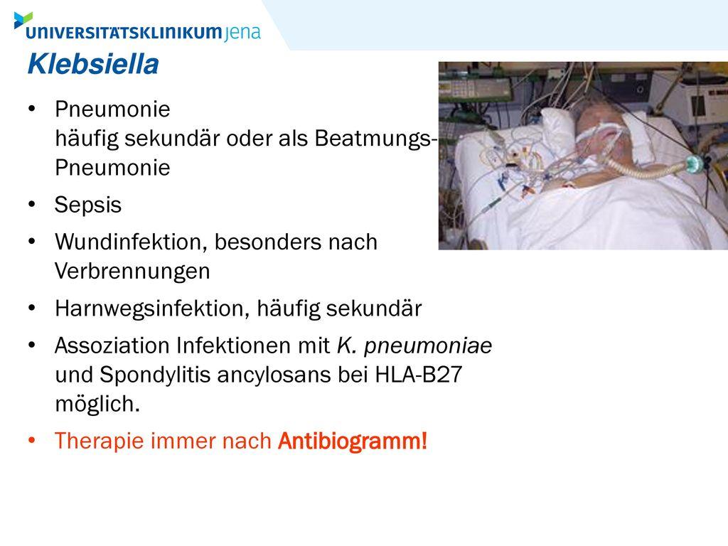 Klebsiella Pneumonie häufig sekundär oder als Beatmungs- Pneumonie