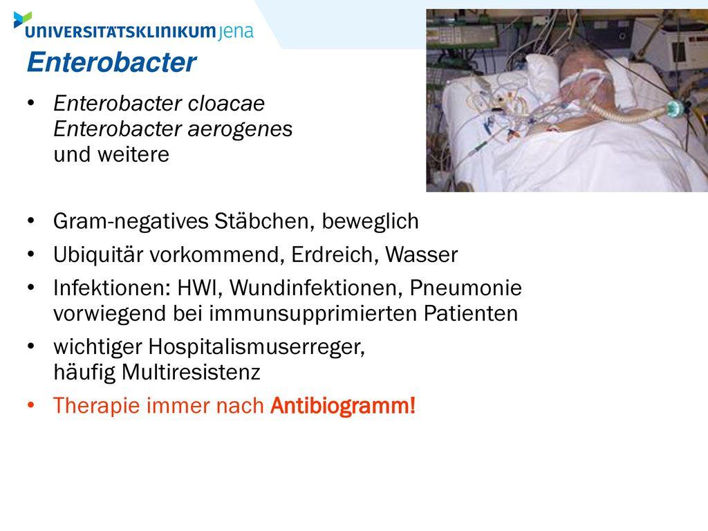 Enterobacter Enterobacter cloacae Enterobacter aerogenes und weitere