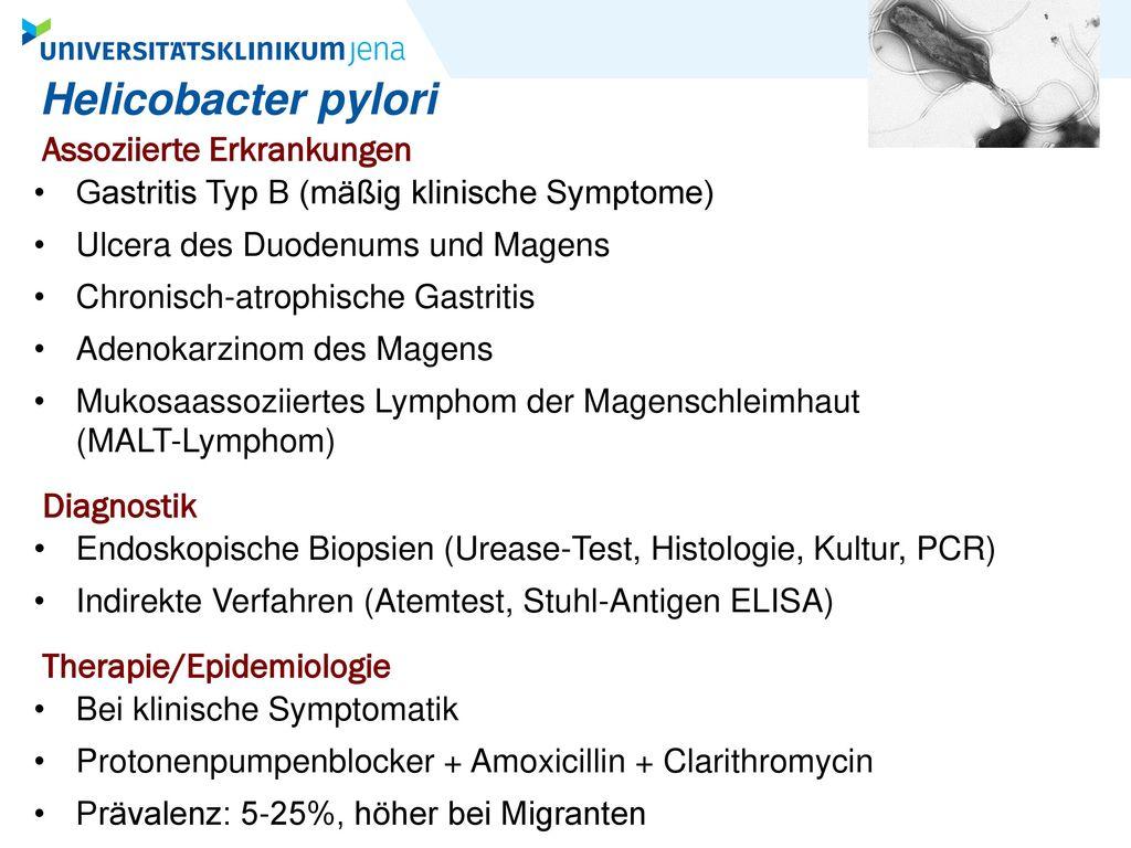 Helicobacter pylori Assoziierte Erkrankungen Diagnostik