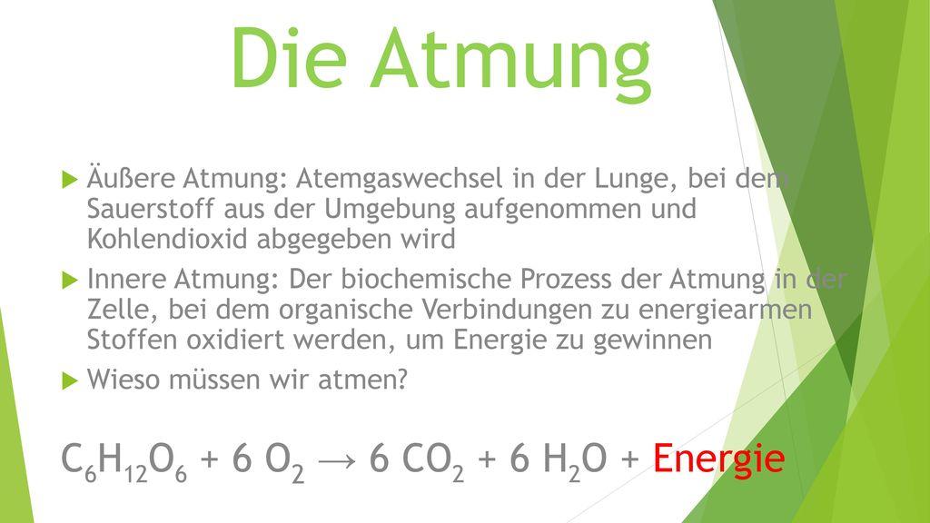 Die Atmung C6H12O6 + 6 O2 → 6 CO2 + 6 H2O + Energie