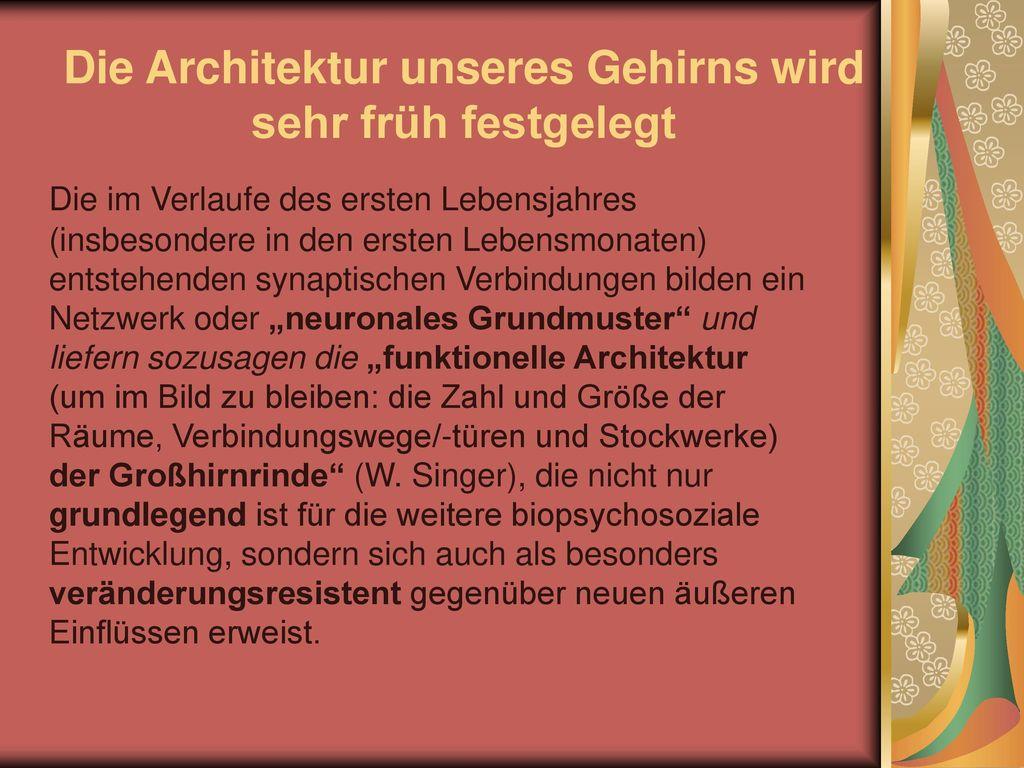Die Architektur unseres Gehirns wird sehr früh festgelegt
