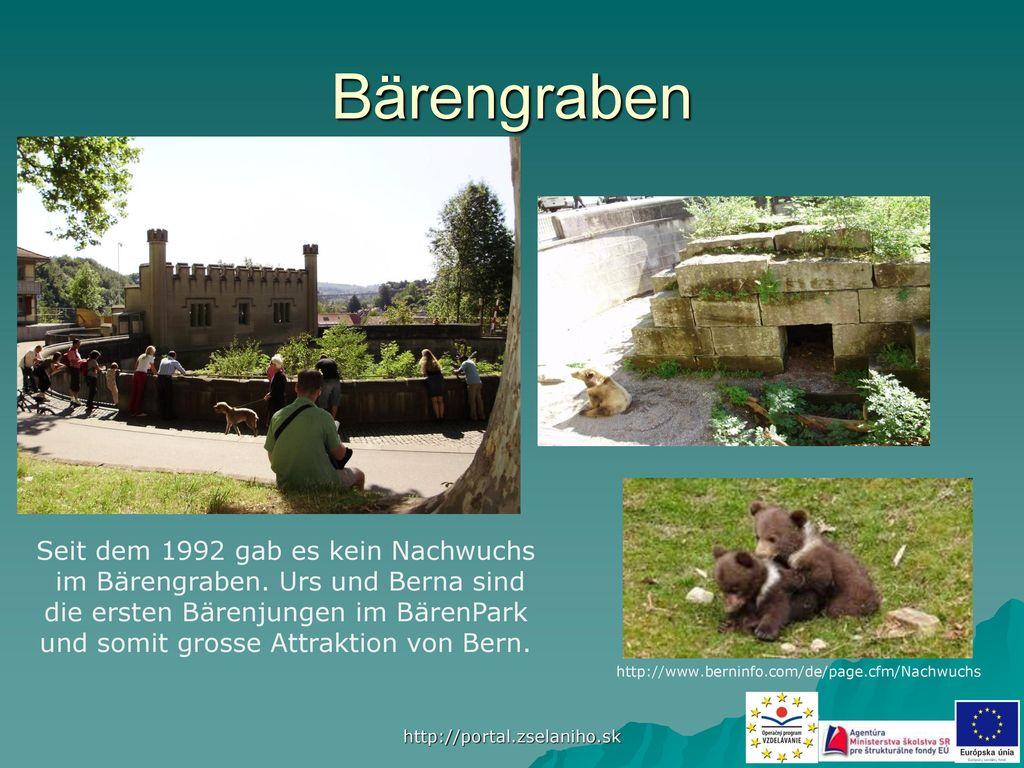 Bärengraben Seit dem 1992 gab es kein Nachwuchs