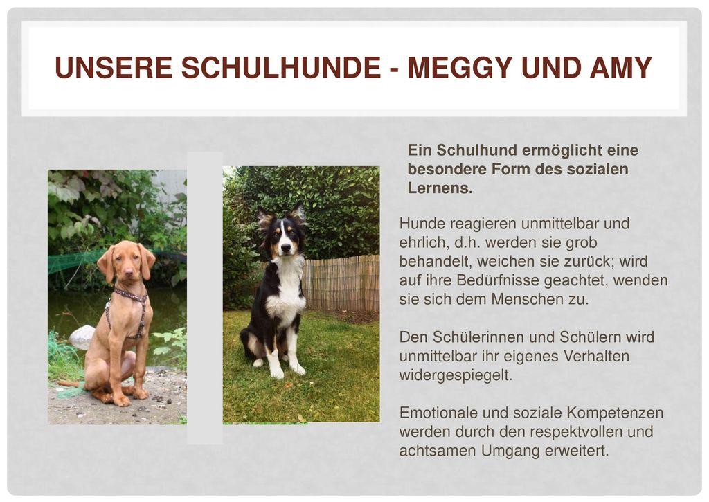 Unsere Schulhunde - Meggy und Amy