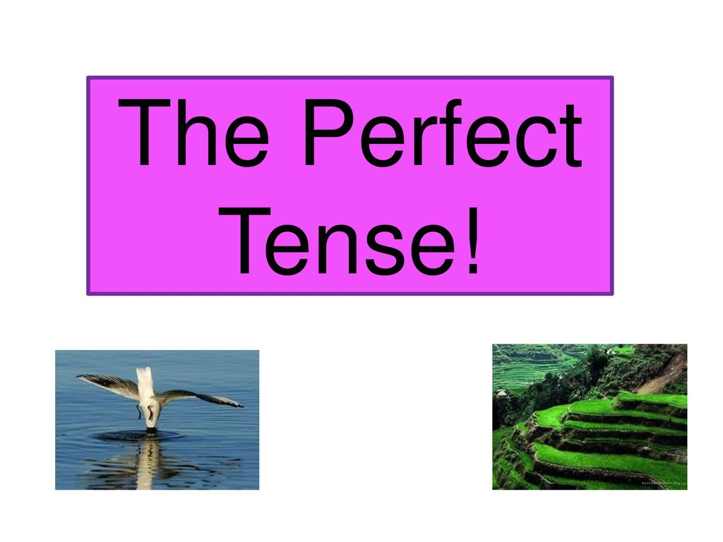 The Perfect Tense!