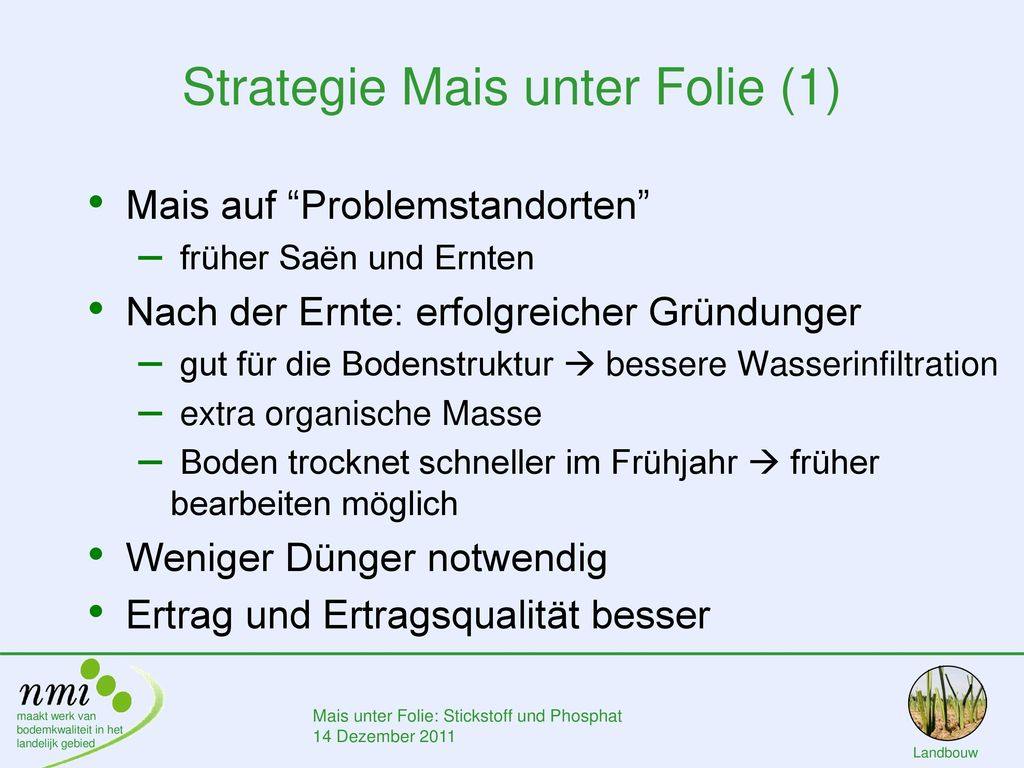 Strategie Mais unter Folie (1)
