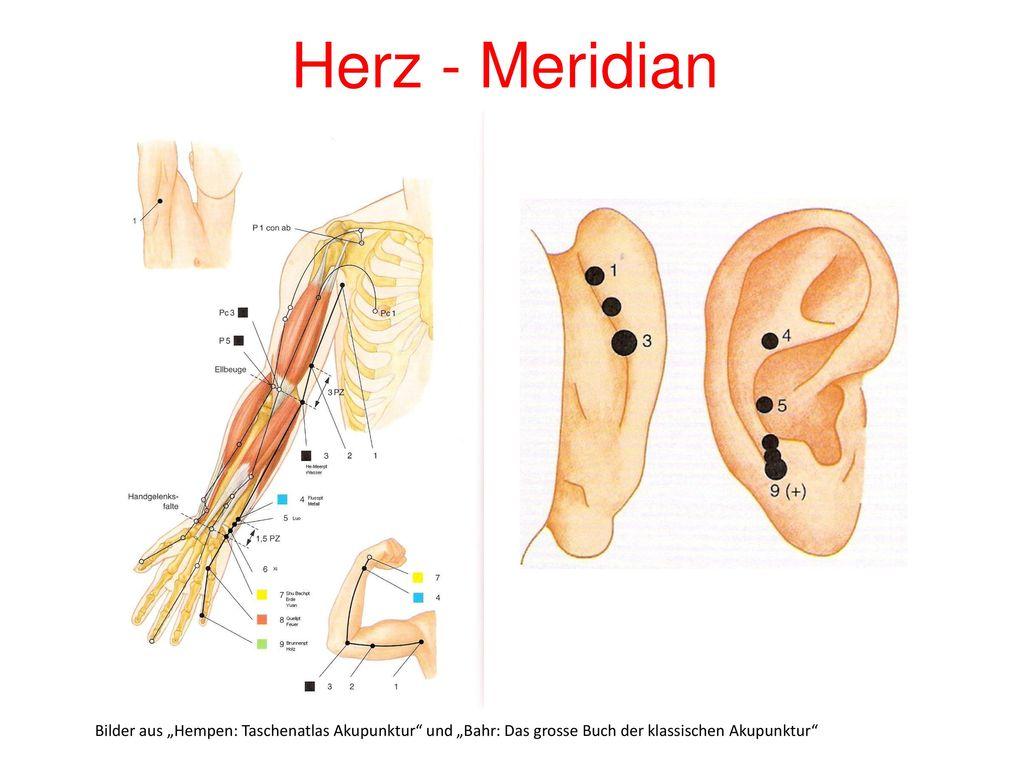 """Herz - Meridian Bilder aus """"Hempen: Taschenatlas Akupunktur und """"Bahr: Das grosse Buch der klassischen Akupunktur"""