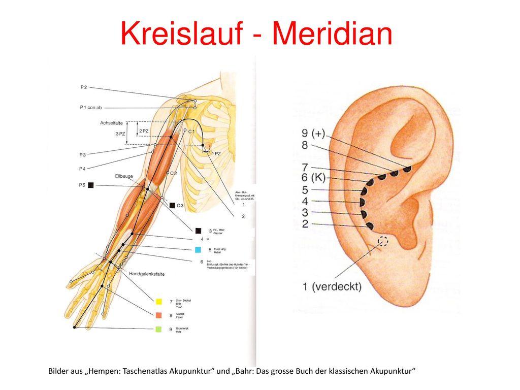 """Kreislauf - Meridian Bilder aus """"Hempen: Taschenatlas Akupunktur und """"Bahr: Das grosse Buch der klassischen Akupunktur"""