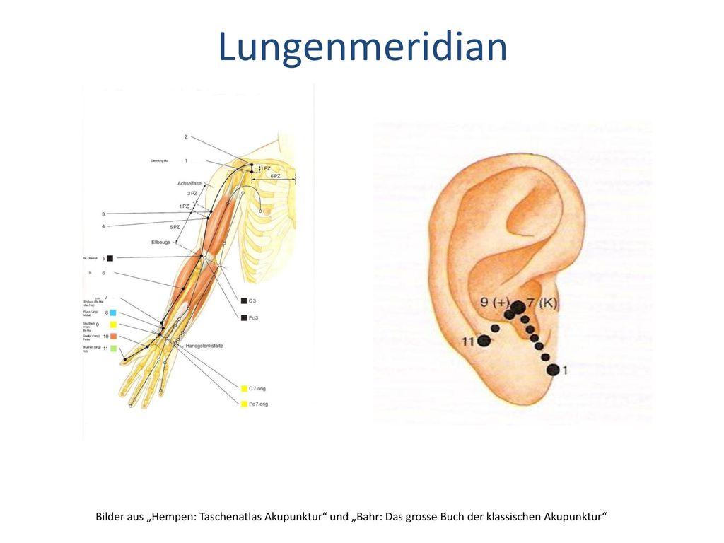 """Lungenmeridian Bilder aus """"Hempen: Taschenatlas Akupunktur und """"Bahr: Das grosse Buch der klassischen Akupunktur"""