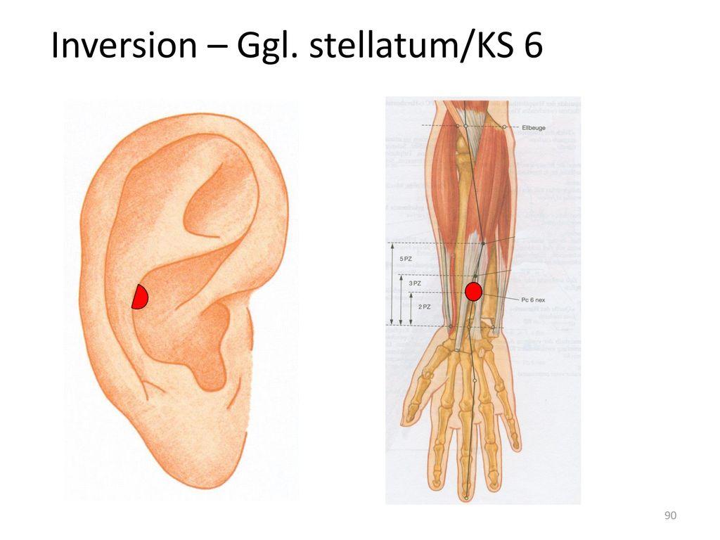 Inversion – Ggl. stellatum/KS 6