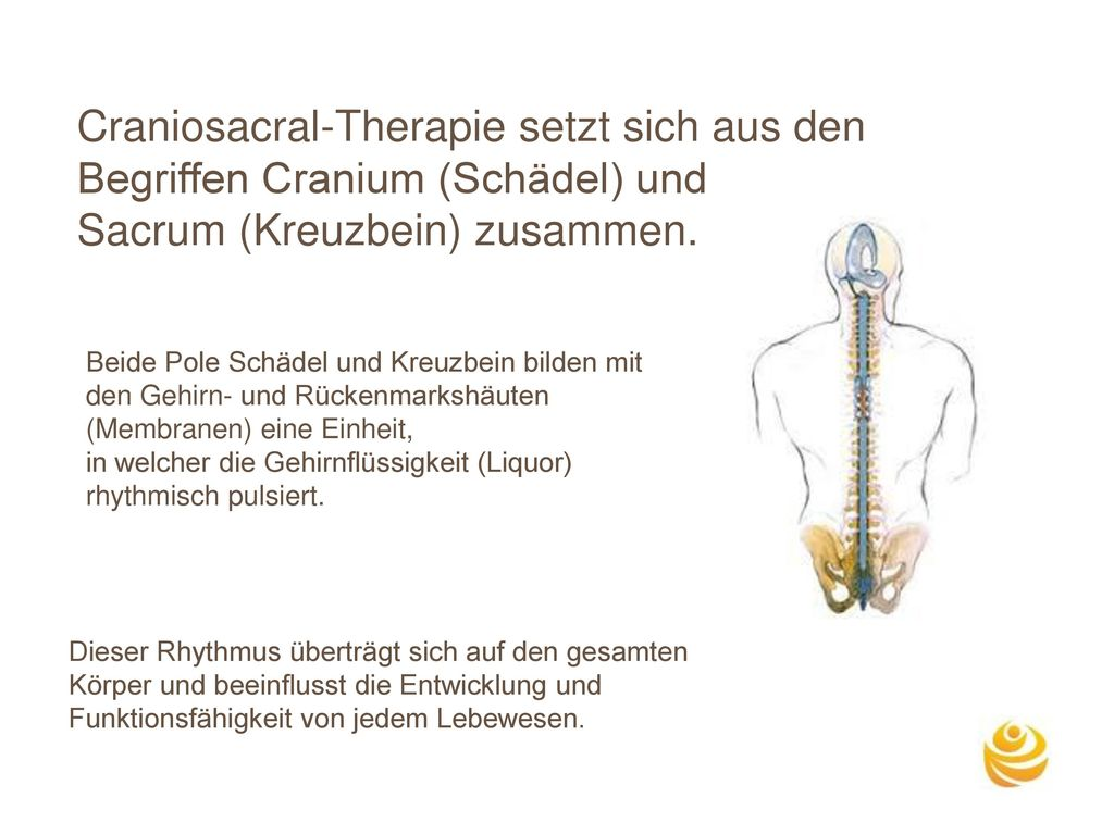 Craniosacral-Therapie setzt sich aus den Begriffen Cranium (Schädel) und Sacrum (Kreuzbein) zusammen.